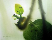 Nature Watercolor Art Painting title 'New Life.water Coloure On Paper.size-18x' by artist Sudipta Karmakar