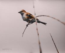 Animals Watercolor Art Painting title 'Sparrow Bird Bird Series -1' by artist Sudipta Karmakar