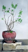 Nature Oil Art Painting title 'Tulsi' by artist Parimal Vaghela