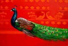 Peacock N Design | Painting by artist Prakash Pore | acrylic | Canvas