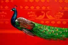 Peacock N Design   Painting by artist Prakash Pore   acrylic   Canvas