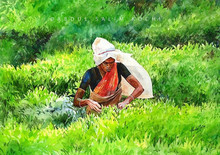 Figurative Watercolor Art Painting title Tea Estate by artist Abdul Salim