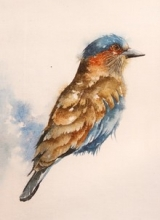 Animals Watercolor Art Painting title Indian Roller by artist Anjana Sihag
