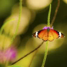 Butterfly - 1 | Photography by artist Vaibhav Kadam | Art print on Canvas