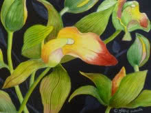 Nature Watercolor Art Painting title 'Cymbidium Orchid (ORIGINAL SOLD)' by artist Subodh Maheshwari