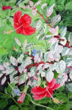 Red Hibiscus Variegated | Painting by artist Vishwajyoti Mohrhoff | watercolor | Campap Paper