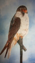Yashodan Heblekar | Oil Painting title Amur Falcon on Canvas Board | Artist Yashodan Heblekar Gallery | ArtZolo.com