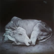 Pen Paintings | Drawing title Sleeping Cow on Paper | Artist Nagesh Devkar