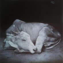 art, drawing, pen, paper, animal, cow