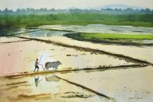Golden Fields | Painting by artist Ramesh Jhawar | watercolor | Paper