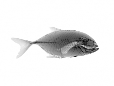 art, photography, paper, animal, fish