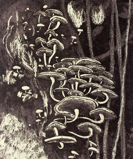 Prachi Sahasrabudhe | Mushrooms In The Woods 1 Printmaking by artist Prachi Sahasrabudhe | Printmaking Art | ArtZolo.com
