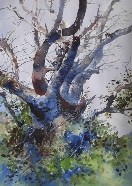 The Tree | Painting by artist Bijay Biswaal | watercolor | Paper