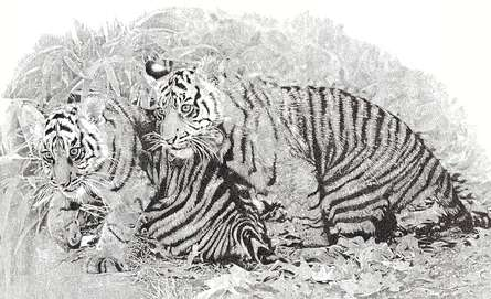 Animals Pen Art Drawing title Brothers by artist Surya Murthy