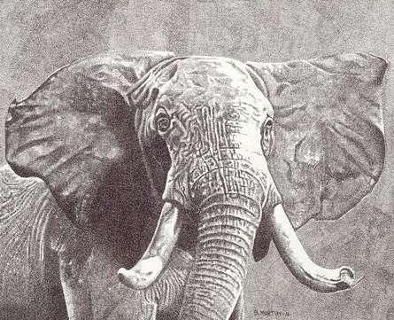 Animals Mixed-media Art Drawing title Majestic by artist Surya Murthy