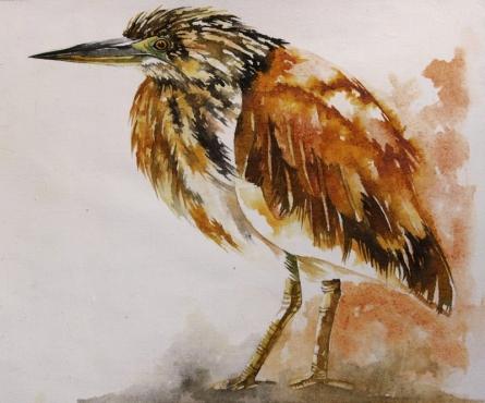 Animals Watercolor Art Painting title Pond Heron by artist Anjana Sihag