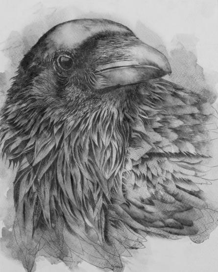 Animals Mixed-media Art Painting title Raven by artist Anjana Sihag