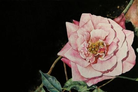 Nature Watercolor Art Painting title Rose by artist Anjana Sihag