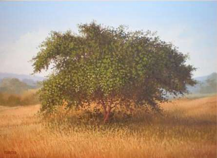 The Bushy Tree | Painting by artist Fareed Ahmed | oil | Canvas Board