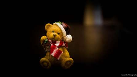 Teddy | Photography by artist Sawant Tandle | Art print on Canvas