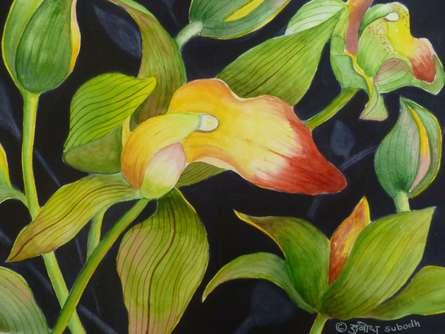 Cymbidium Orchid (ORIGINAL SOLD)   Painting by artist Subodh Maheshwari   watercolor   Arches Paper