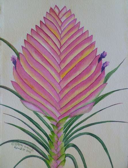 Tillandsia | Painting by artist Subodh Maheshwari | watercolor | Arches Paper