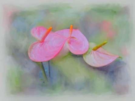 Usha Shantharam | Pink Anthurium Digital art Prints by artist Usha Shantharam | Digital Prints On Canvas, Paper | ArtZolo.com