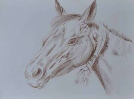 Horse | Painting by artist Bhavesh Patel | dry-pastel | Paper