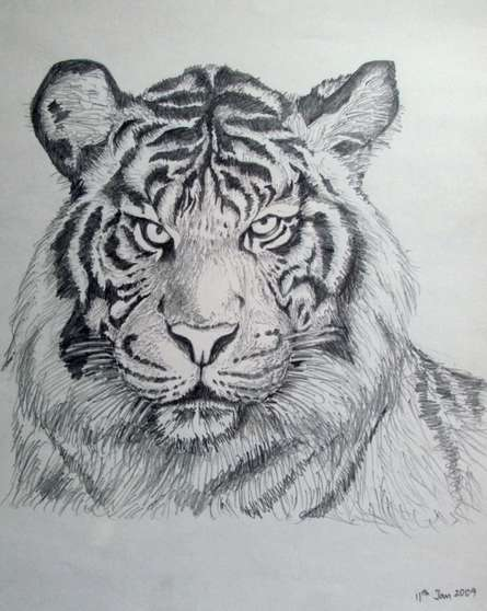 Animals Pencil Art Drawing title 'Bengal Tiger' by artist Rajendra V