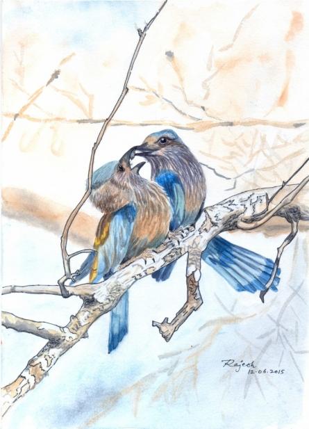 Love Birds | Painting by artist Guru Rajesh | watercolor | Paper