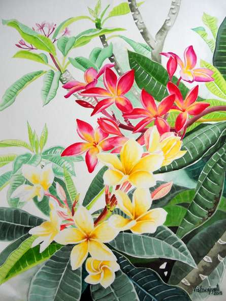 Photorealistic Watercolor Art Painting title 'Plumerias' by artist Vishwajyoti Mohrhoff