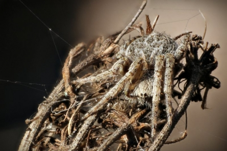 Camouflage - Spider | Photography by artist Rainer Clemens Merk | Art print on Canvas