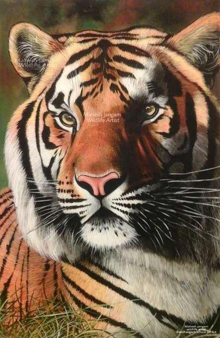 Wildlife Tiger By Artist Mahesh Jangam Acrylic Paintings