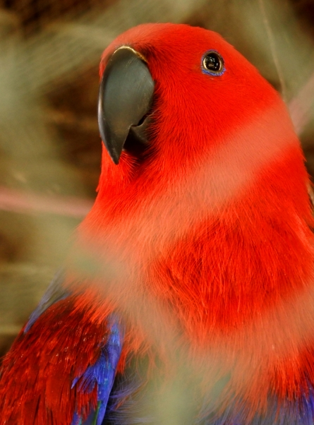 parrot, bird, cage, animal, nature, pet, background, cute, tropical, feather, yellow, beautiful, wild, beak, colorful, portrait, color, green, exotic, dome