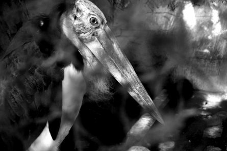 beak, black, white, animal, nature, bird, feather, background, wild, wildlife, head, beautiful, sharp, eye, wing, portrait, isolated, yellow, natural, eagl