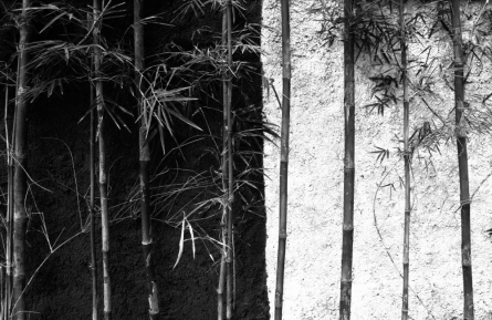 Wall Bamboo Background | Photography by artist Rahmat Nugroho | Art print on Canvas