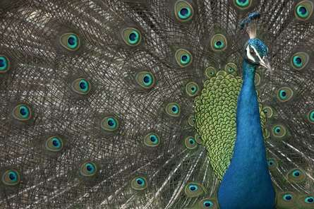The Daring Stare | Photography by artist Praveen Pai | Art print on Canvas