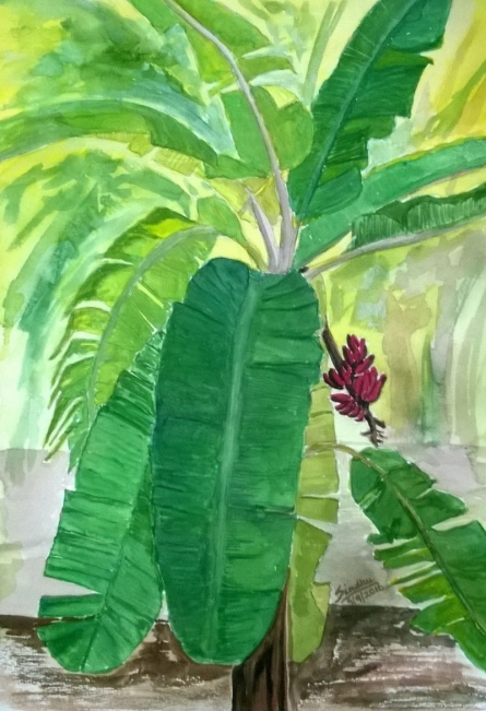 The Banana Tree | Painting by artist Sindhulina Chandrasingh | watercolor | Paper