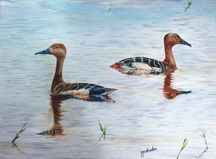 Pair of  Whistling Teals   Painting by artist Yashodan Heblekar   oil   Canvas Board