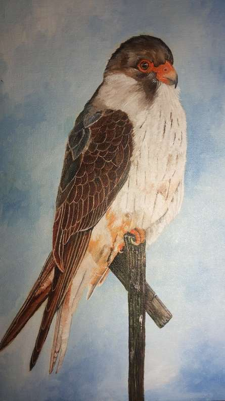 Yashodan Heblekar Paintings | Oil Painting - Amur Falcon by artist Yashodan Heblekar | ArtZolo.com