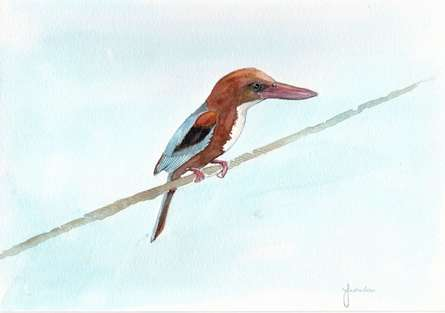 Animals Watercolor Art Painting title 'White Breasted Kingfisher' by artist Yashodan Heblekar