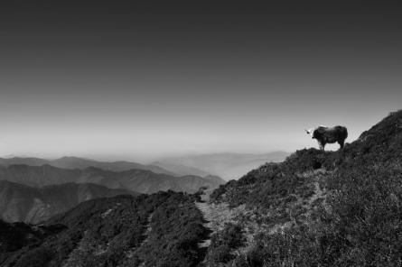 Landscape 39 | Photography by artist Satyaki Biswas | Art print on Canvas