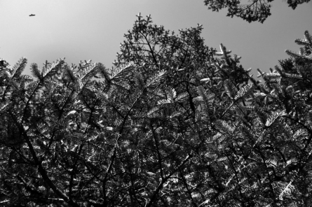 Landscape 46 | Photography by artist Satyaki Biswas | Art print on Canvas
