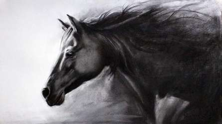Charcoal Paintings | Drawing title Horse Charcoal on Paper | Artist Sundeep Kumar