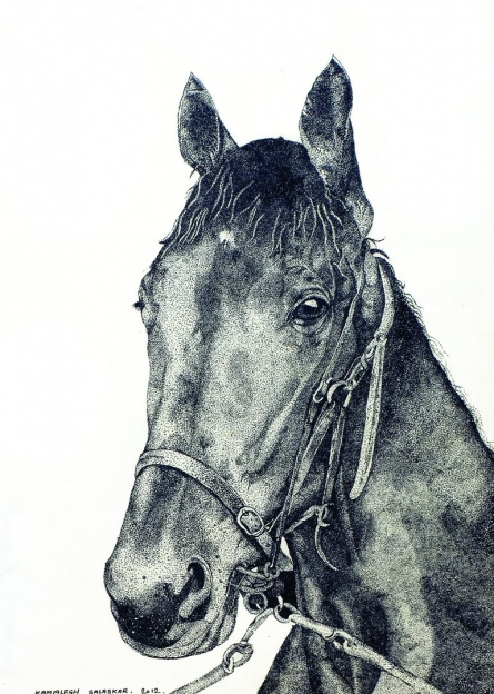 Ink Paintings | Drawing title Horse 1 on Paper | Artist Kamalesh Salaskar