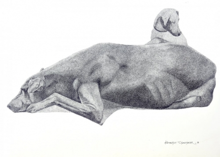 Animals Ink Art Drawing title 'Resting Dog' by artist Kamalesh Salaskar