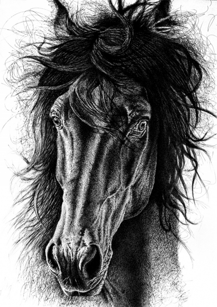 Animals Pen-ink Art Drawing title Portrait Of Speed by artist Pratap Chakraborty