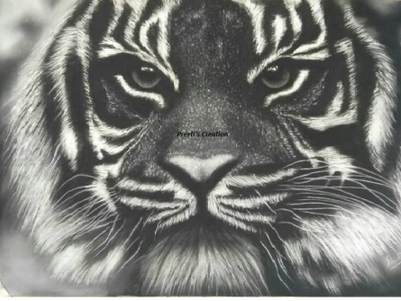 Preeti Ghule | Charcoal Painting title Tiger on Paper | Artist Preeti Ghule Gallery | ArtZolo.com