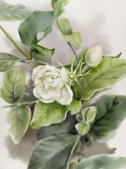 Other Watercolor Art Painting title 'Jasmine' by artist Kaukab Ahmad