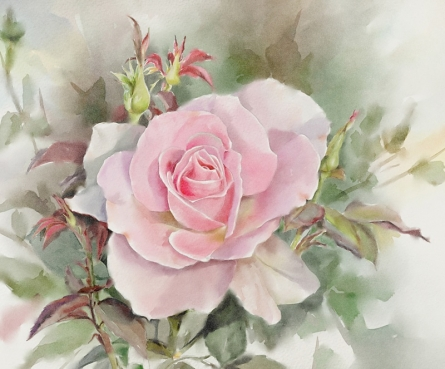 Other Watercolor Art Painting title 'Rose2a' by artist Kaukab Ahmad